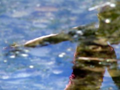 ...but she left (GustavoG) Tags: carkeekpark blue water reflection girl upturned upsidedown dreamy illusion