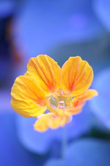 orange (α) Tags: flower garden grass green faveflower