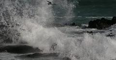 Hoezit Seemeeu (Lollie-Pop) Tags: africa afrika kaapstad capetown zuidafrika sudafrica cittdelcapo afriquedusud waves branders rocks rotse see ocean sea