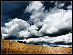 Harvest time... (Cilest) Tags: 2005 blue sky white nature field barley clouds wow skyscape landscape gold austria corn cilest herbst great grain perspective harvest dramatic wolken august bluesky unfound diagonal topc100 crop cereals mothernature sigi waldviertel keinsommer mc04 mc04submission01epicsky topmc04 topmc04submission01