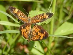 Precursor to Caterpillars (Brujo) Tags: