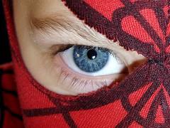 spider unmasked