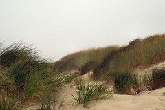 Grassy Dunes (lawatha) Tags: ocean beach grass fog oregon sand pacific dunes newport getty sanddune beachgrass ammophila europeanbeachgrass