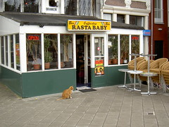 Rasta Cat (kian esquire) Tags: pet cats pets holland cute netherlands amsterdam cat fur high kitten fuzzy kitty coffeeshop marijuana rasta rastababy