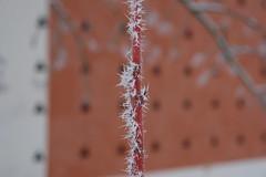 DSC01133 (niclasmaanson) Tags: winter orange house snow tree ice rebro r1 orebro karlslund sonyr1 dscr1 niclasmansson niclasmnsson