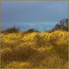 STORM LIGHT IN THE DUNES (ESOX LUCIUS) Tags: sea holland beach dunes taco naturereservedekwadehoek