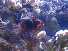 fish aquarium shark sydney sydneyaquarium