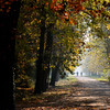 Afternoon Glow (Lord Markus) Tags: trees alberi shadows ombre shadow autunno autumn fall 2016 monza parco park parcodimonza colors leaves foglie persone people 85mm 14 sentiero terra path woods bosco nikon d300s