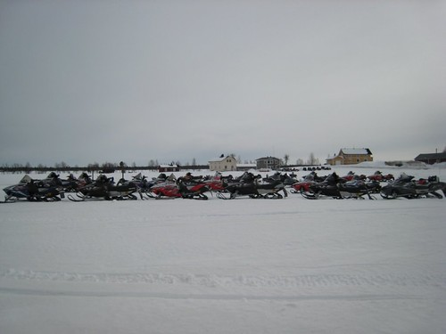 A herd of wild snowmobiles