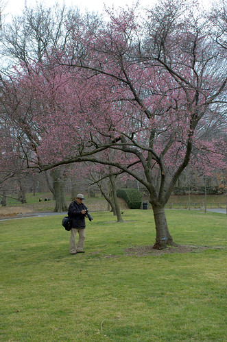Lone Flowering Cherry and my Doppelganger