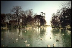 (andrewlee1967) Tags: yorkshire lake ducks andrewlee1967 uk abigfave diamondclassphotographer andylee1967 canon400d landscape focusman5 england andrewlee anawesomeshot