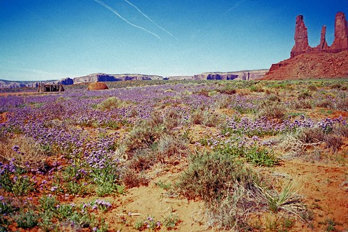 Navajo Land in Kodachrome