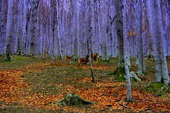 Ancient Forest (Ewciak & Leto) Tags: wood trees nature forest 500v20f searchthebest fantasy legend canoneos350d coolest roedeer myth mystic ancientforest 250v10f abigfave colorphotoaward v401500 v101200 v76100 v501600 v601700 v701800 v201300 castlesdreams v301400 v801900 ultrashot v9011000