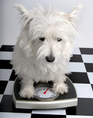Dog Weighing