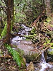 Trailside Stream1