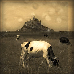 Mont St Michel (opdrie) Tags: ocean trip sea summer vacation sky blackandwhite bw holiday france green church nature abbey field grass animal sepia vintage square landscape geotagged cow vakantie interestingness topf50 topv555 topv333 bravo brittany europe catholic cattle cows farm bretagne tourist explore ciel monastery normandie shadesofgrey normandy mont kerk klooster weiland montstmichel montsaintmichel koe toerist interestingness5 instantfave i500 abigfave utatabythesea artlibre impressedbeauty lemontstmichelbassenormandie frpix utata:project=sepia opdrie