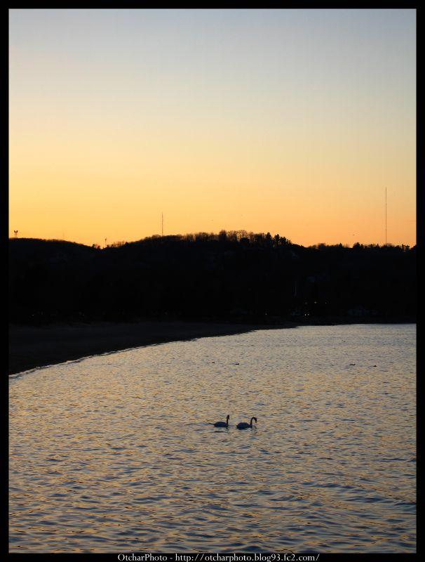 Lake and Swans
