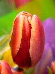 Tesco flowers #2 - by samdiablo666