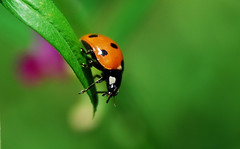 ladybug2 (Scott*) Tags: white macro green nature natural alabama naturesfinest thebiggestgroup nikonstunninggallery jsmoorman thechallengegame challengegamewinner thenextbiggestgroup