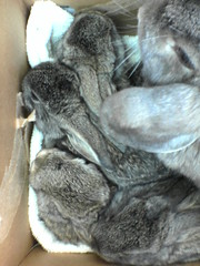 on their way to a better place (Geek_chic) Tags: baby cute rabbit bunny orphan shelter adoption rabbitrescue