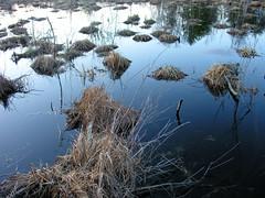 Mirrorbog (jere7my) Tags: reflection nature hiking saratogasprings hike swamp marsh bog hummocks bogmeadowtrail