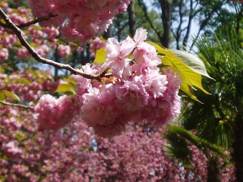 Botanical_Gardens_029