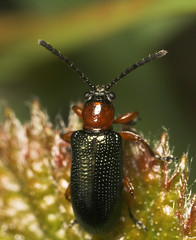 """It's a Beetle ) • <a style=""""font-size:0.8em;"""" href=""""http://www.flickr.com/photos/57024565@N00/474437960/"""" target=""""_blank"""">View on Flickr</a>"""