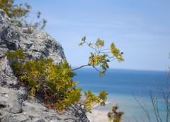 Arch Rock Tree
