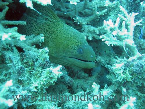 Dive at Dayang Island