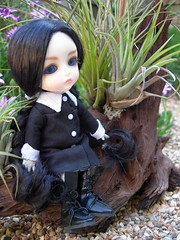 Wednesday (Herr Olaf) Tags: family ball wednesday doll gothic retro bjd dollfie addams jointed latidoll lati