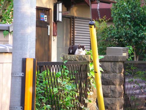 Today's Cat@20070504