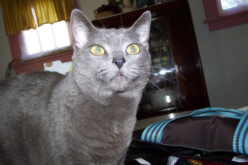 meow? by Emilyannamarie