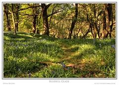 Bluebell Glade (Sean Bolton (no longer active)) Tags: wales carmarthenshire cymru bluebell hdr wfc 3p rspb photomatix supershot seanbolton welshflickrcymru ffotocymrucouk ffotocymru