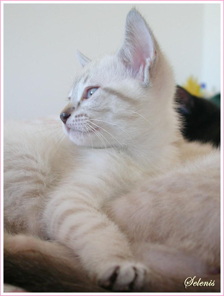 Kiwi - adoptada . adopted