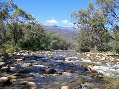 Swampy plains river (hollis_corey) Tags: mountains water river fishing close snowy hills clear serenity nsw flyfishing snowymountains crystalclear troutfishing crysal khancoban kosiosko swampyplainsriver