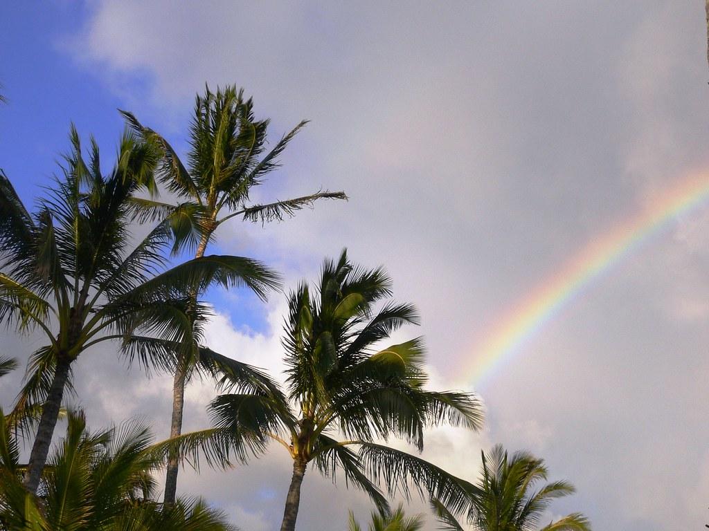 Palm & Rainbows