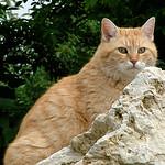 rock lion thumbnail