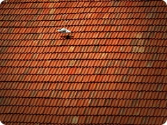 Dam Kuu  Roof Bird  (Zleyha Sucu) Tags: roof house bird animal turkey ultimate dam seagull trkiye istanbul ev coolest ku at mart hayvan fotorafkraathanesi aplusphoto natureaward