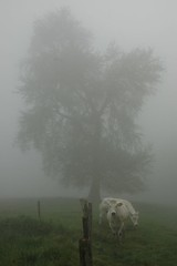 Mr misty (josnas) Tags: morning trees favorite mist tree nature animals fog cow nikon belgium d70s boom arbre ochtend vroeg dworp murkiness anawesomeshot josnas weikes voormiddag jonasdreesen