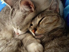 Basil & Bella (Monique Barber) Tags: pet cats cute love animal cat snuggle hug kitten sleep kitty kittens cuddle cosy