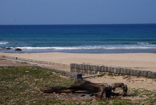 濱海海灘-枯木