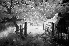 (Trevor Hare) Tags: uk england bw digital isleofwight infrared grdigital ricoh pointshoot grd quarr bw093irfilter
