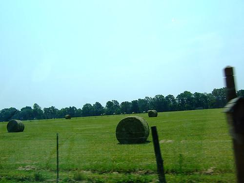 Green hay!