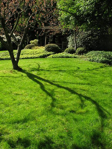 Springtime shadows