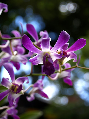 orchid flower macro Dhon jason philippines travel vacation photos islandboyinthecity photo