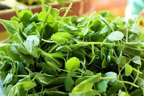 Organic Pea Tendrils