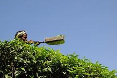 3 Pruning