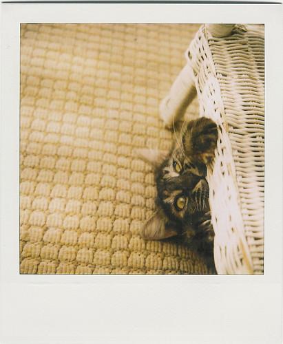 steve, the girl cat