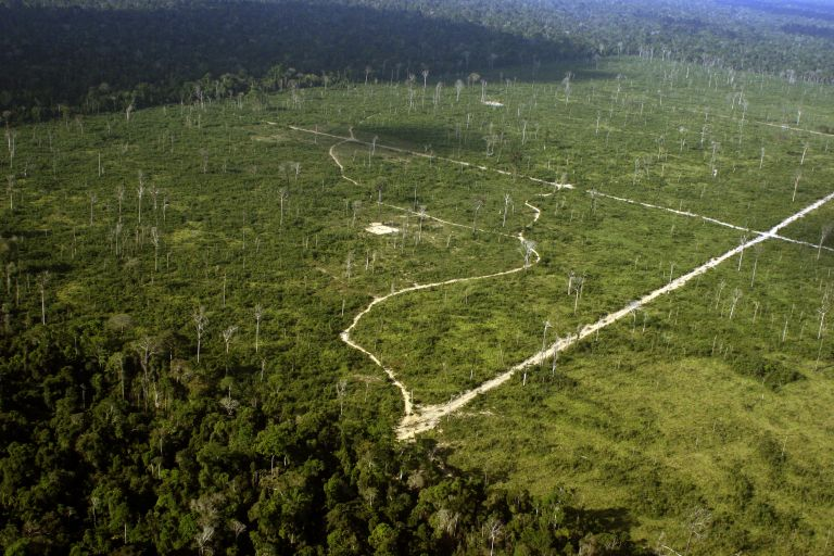 Deforestation in the Amazon to make way for cattle