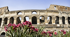 Colosseo in Afternoon (Stuck in Customs) Tags: old pink flowers red people italy rome roma beautiful museum architecture dead photography amazing ancient nikon ruins italia photographer theatre gorgeous famous tourists most bunch historical killed wars charming plans monuments colloseum hdr italie romans gladiator colosseo centuries spectacle pains romains highquality historiques stuckincustoms treyratcliff